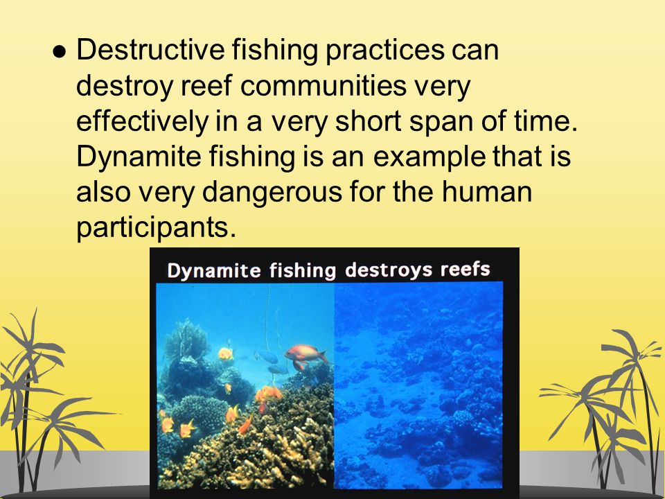 Destructive fishing practices can destroy reef communities very effectively in a very short span of time.