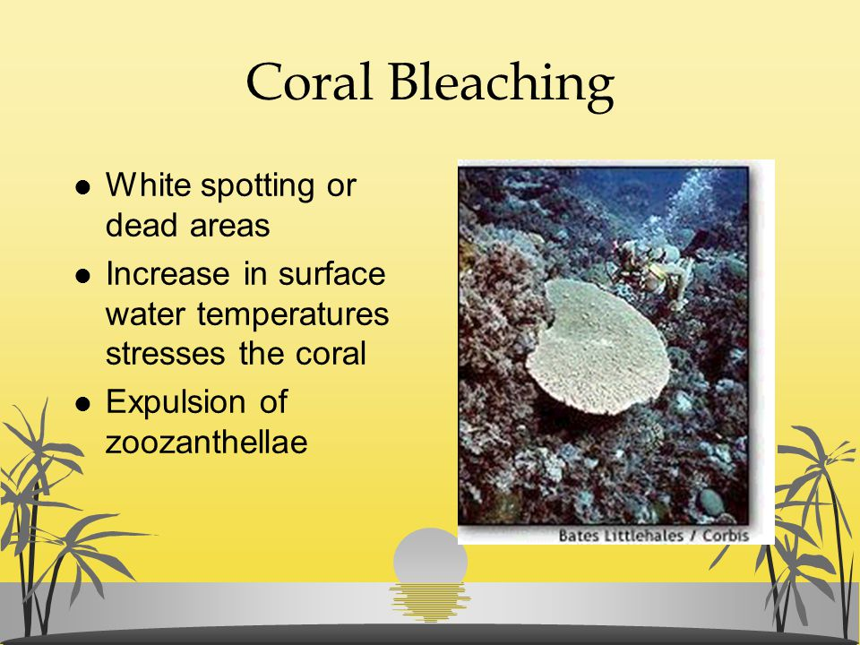 Coral Bleaching White spotting or dead areas