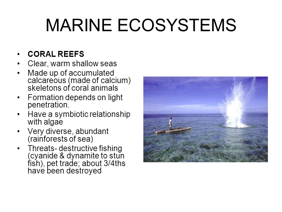 MARINE ECOSYSTEMS CORAL REEFS Clear, warm shallow seas