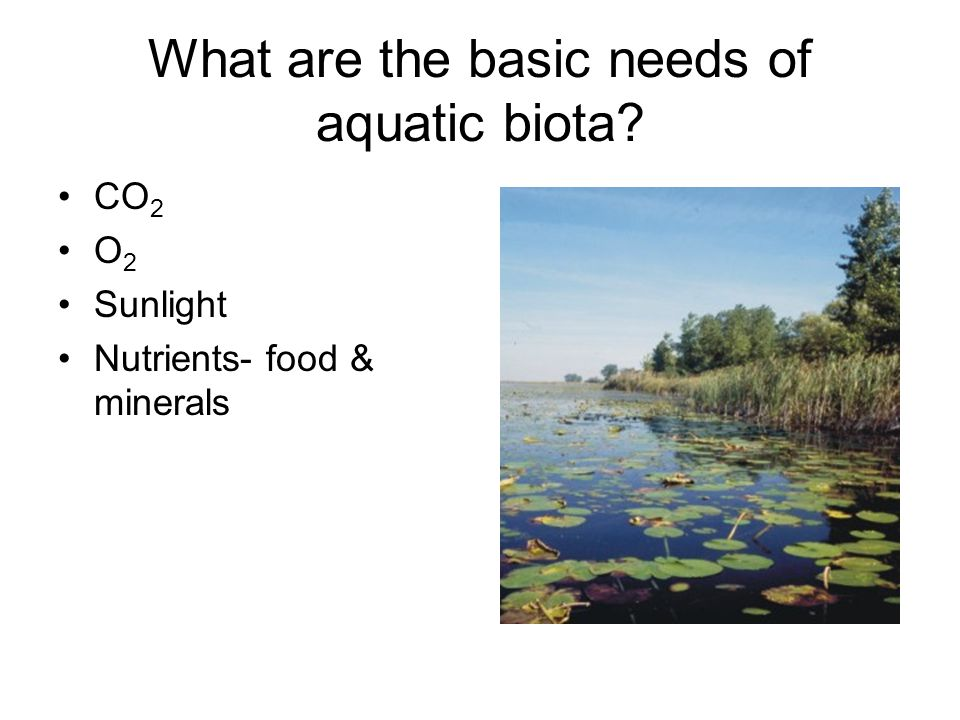 What are the basic needs of aquatic biota