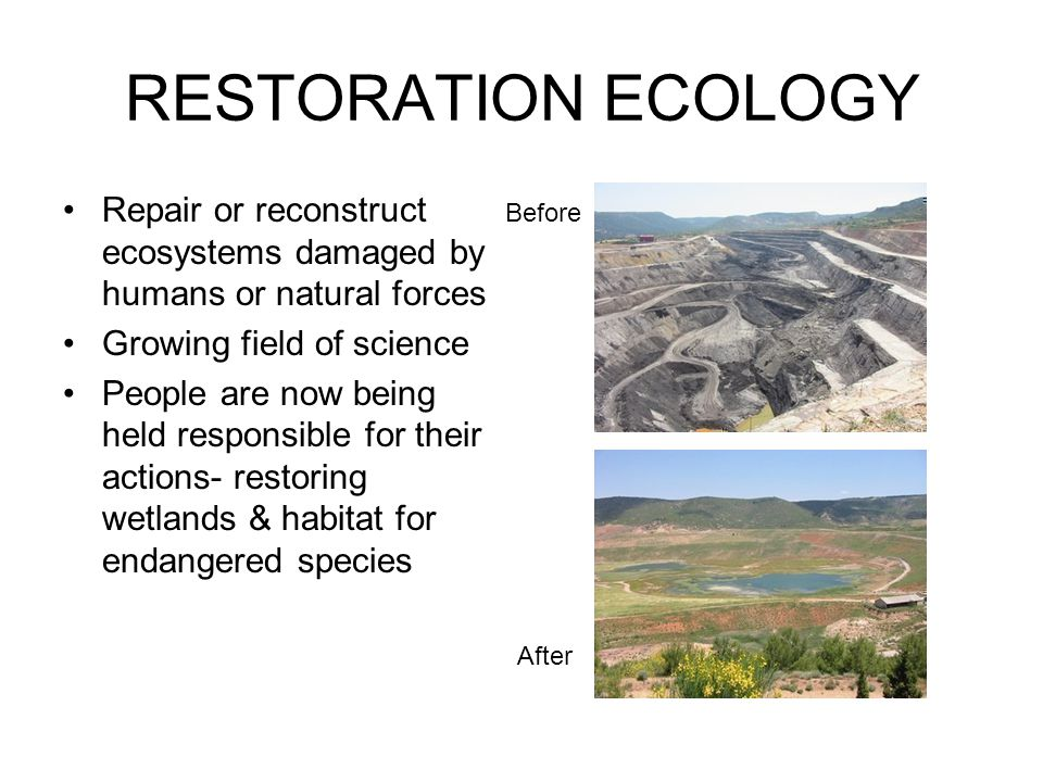 RESTORATION ECOLOGY Repair or reconstruct ecosystems damaged by humans or natural forces. Growing field of science.