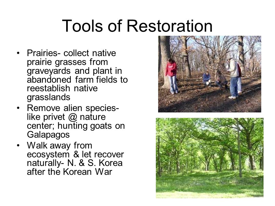 Tools of Restoration Prairies- collect native prairie grasses from graveyards and plant in abandoned farm fields to reestablish native grasslands.