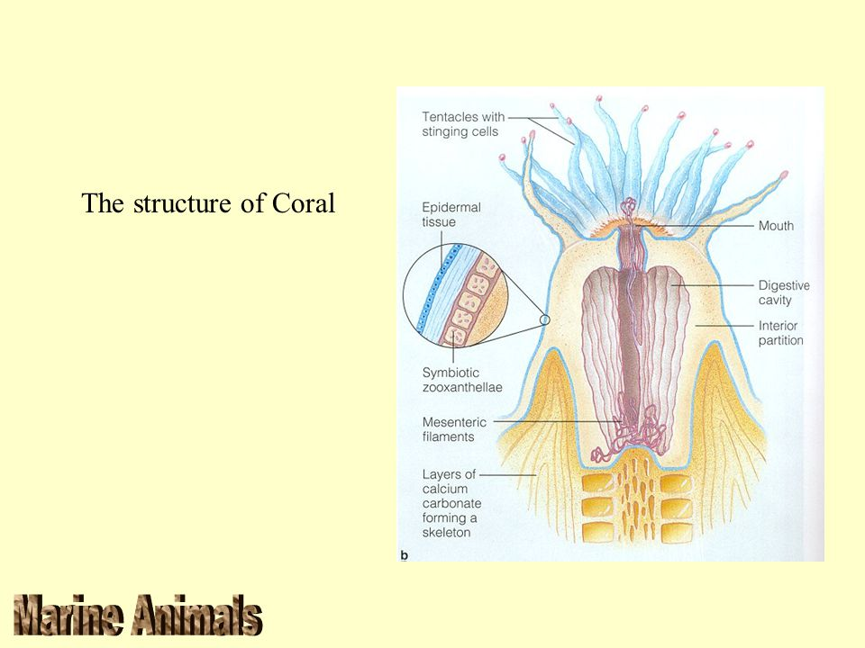 The structure of Coral