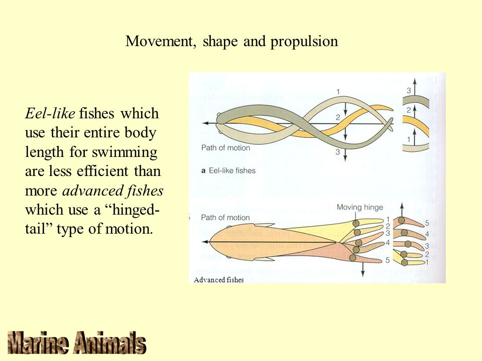 Movement, shape and propulsion