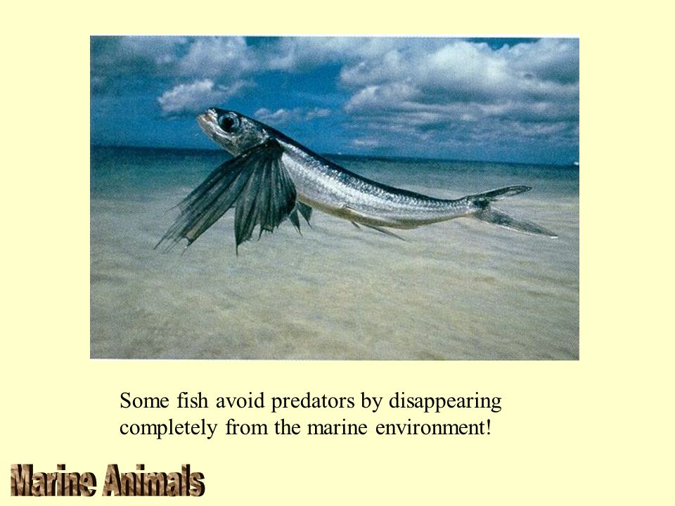 Some fish avoid predators by disappearing completely from the marine environment!