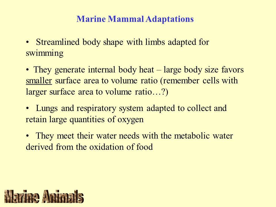 Marine Mammal Adaptations