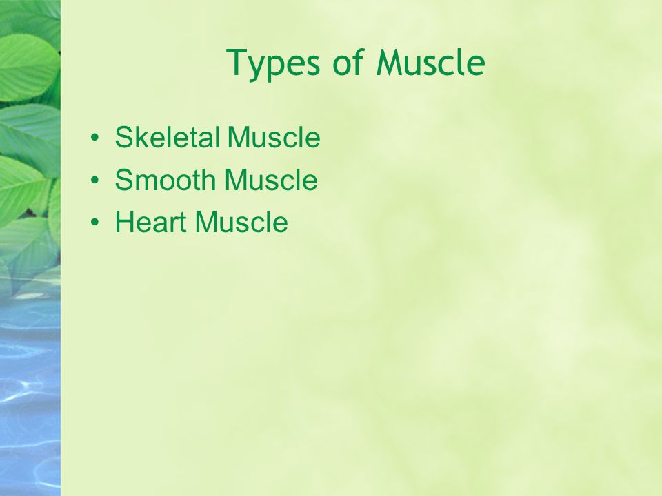 Types of Muscle Skeletal Muscle Smooth Muscle Heart Muscle