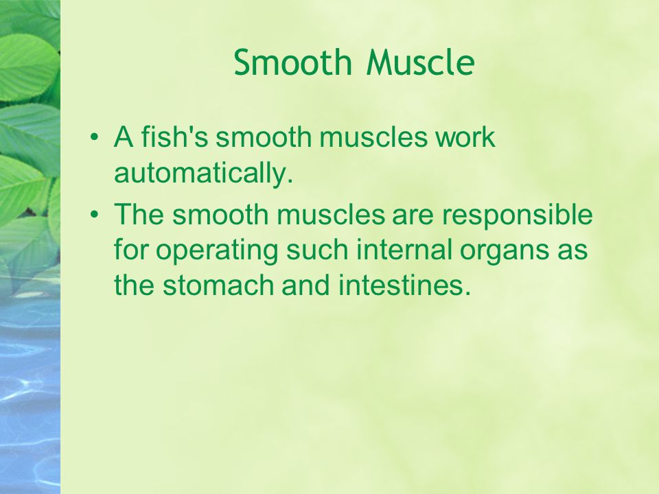 Smooth Muscle A fish s smooth muscles work automatically.