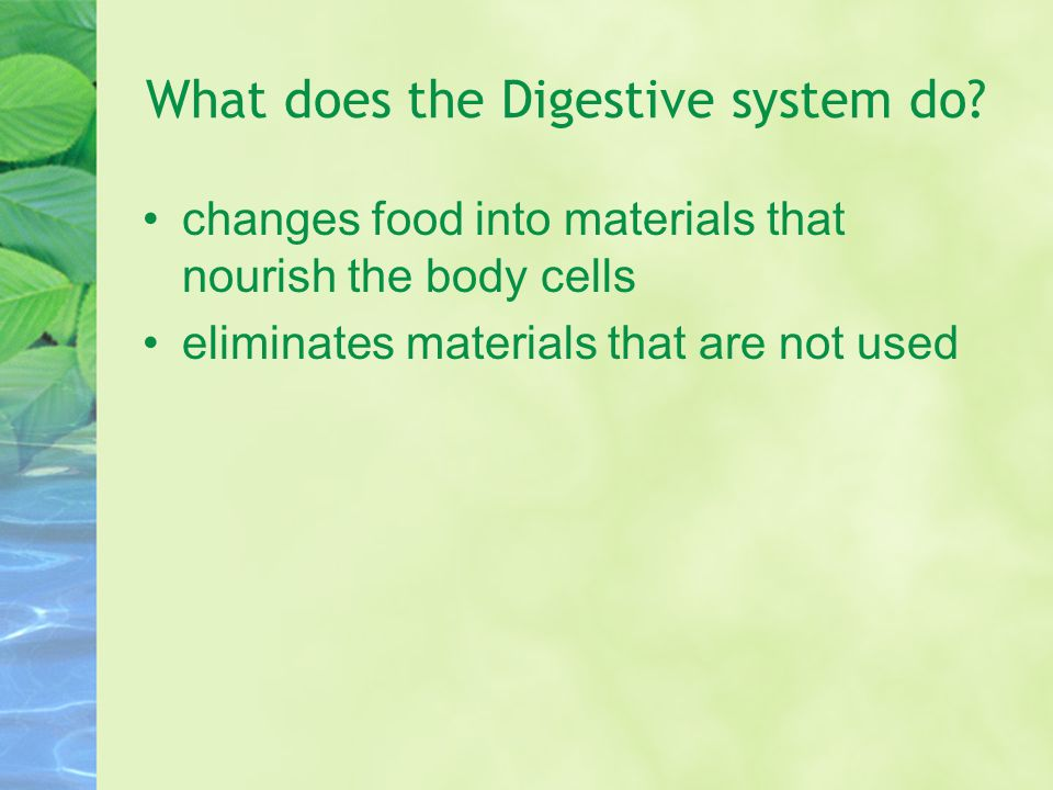 What does the Digestive system do
