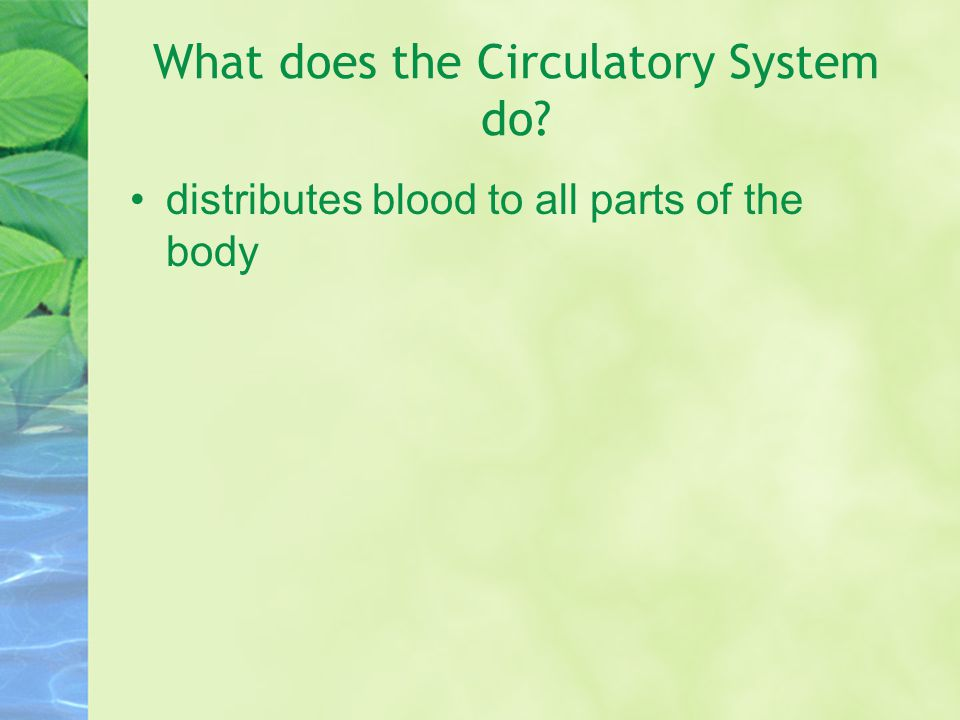 What does the Circulatory System do
