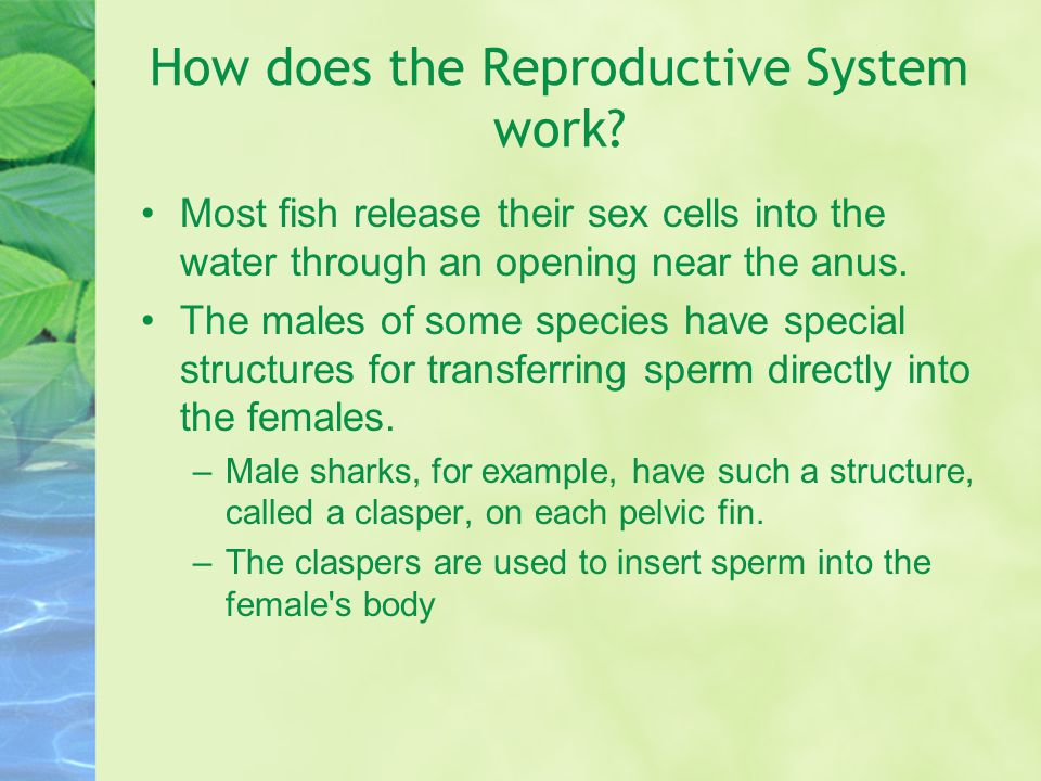 How does the Reproductive System work