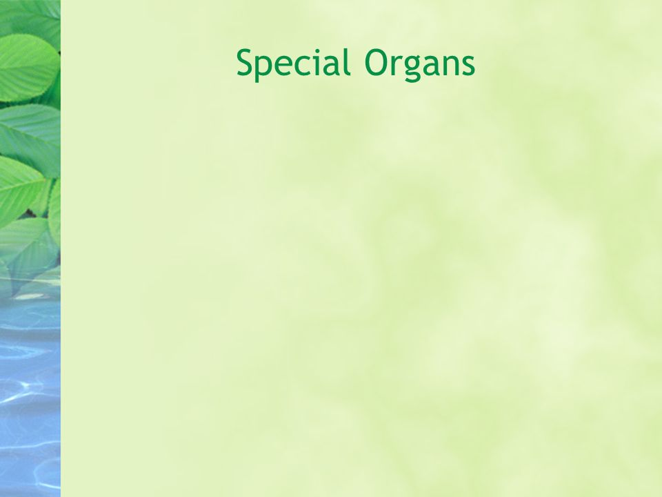 Special Organs