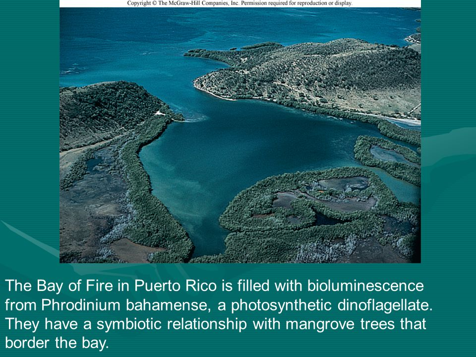 The Bay of Fire in Puerto Rico is filled with bioluminescence