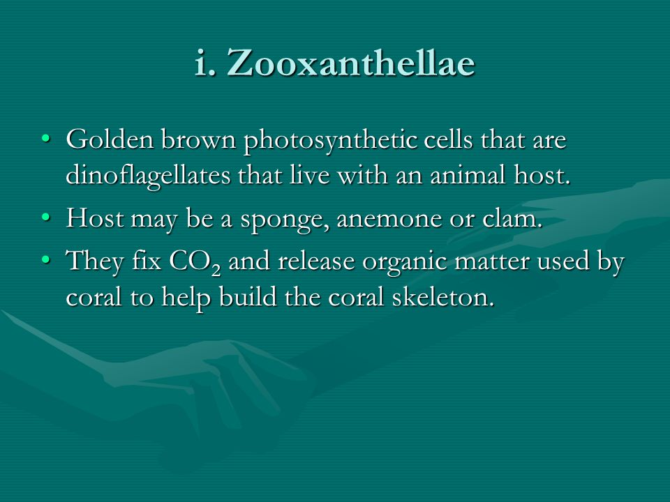 i. Zooxanthellae Golden brown photosynthetic cells that are dinoflagellates that live with an animal host.