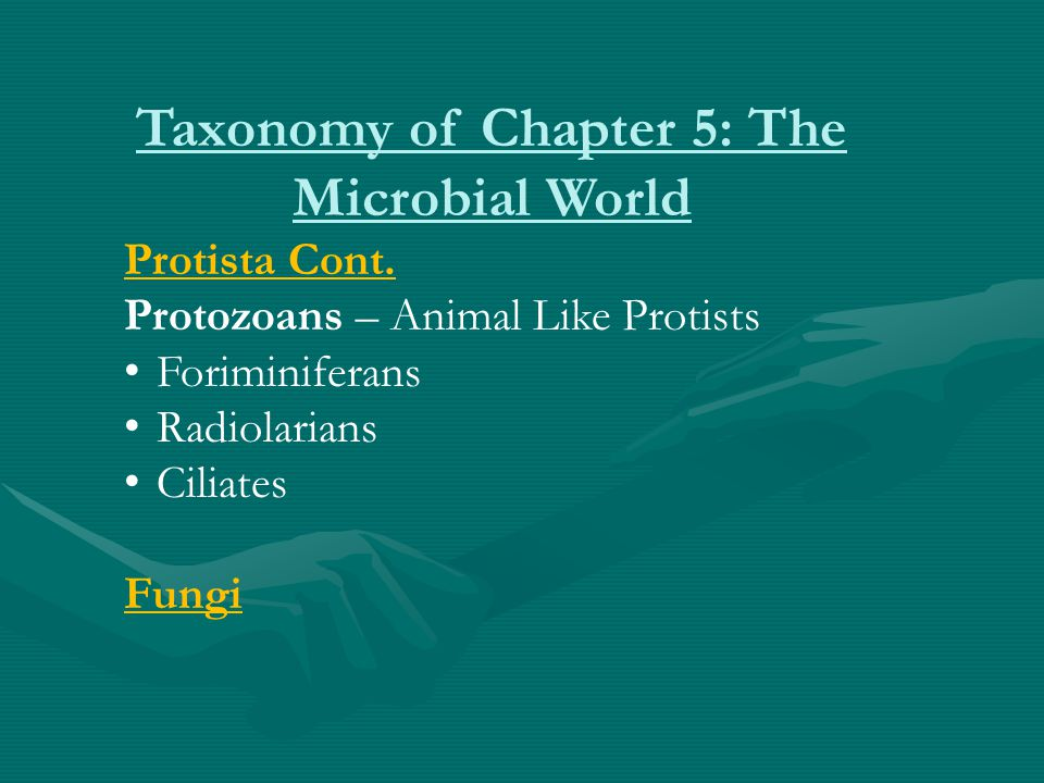 Taxonomy of Chapter 5: The Microbial World