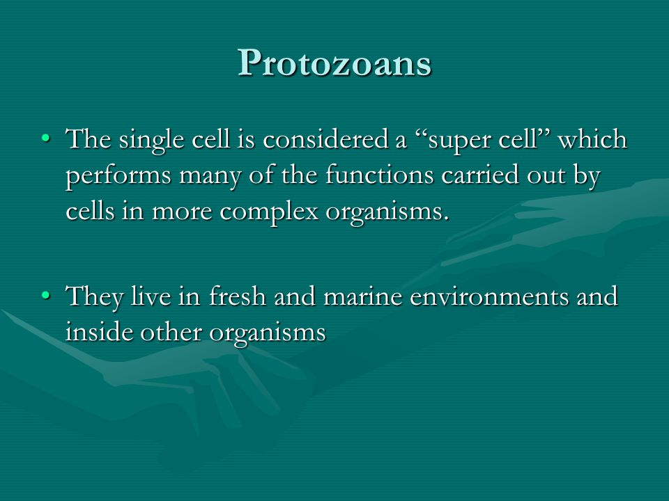 Protozoans The single cell is considered a super cell which performs many of the functions carried out by cells in more complex organisms.
