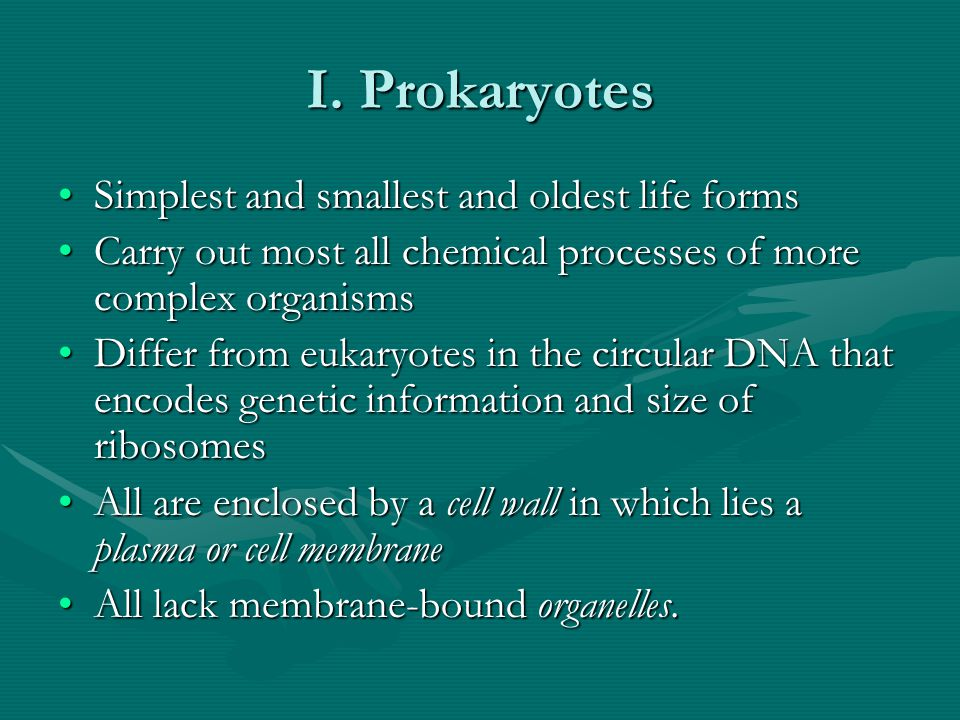 I. Prokaryotes Simplest and smallest and oldest life forms