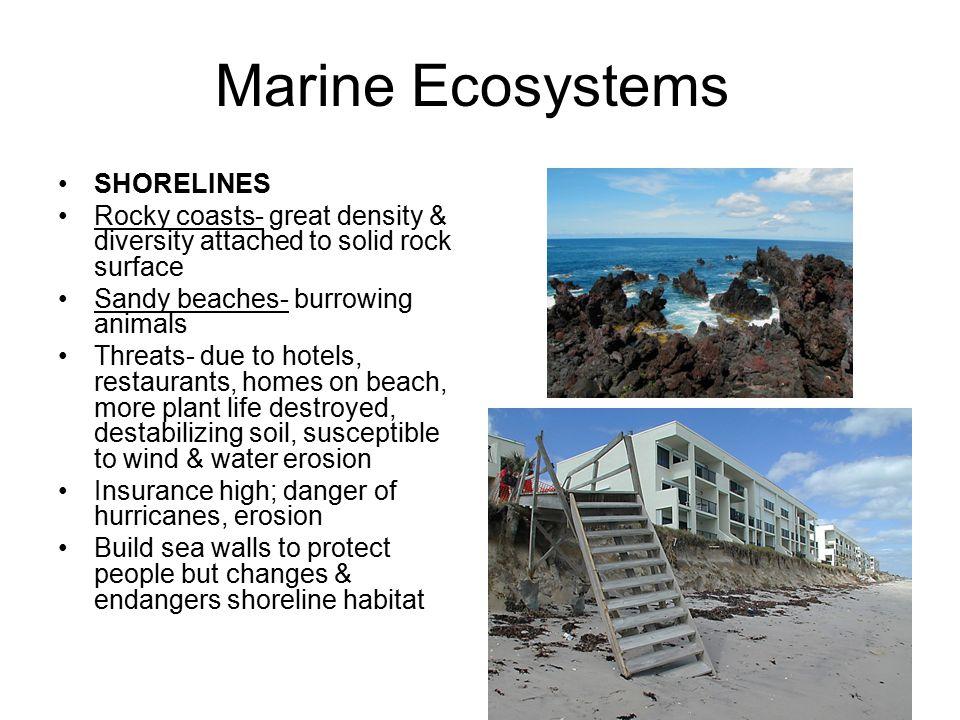 Marine Ecosystems SHORELINES
