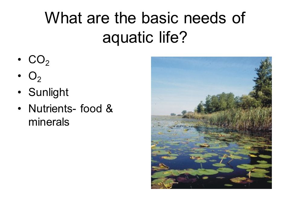 What are the basic needs of aquatic life