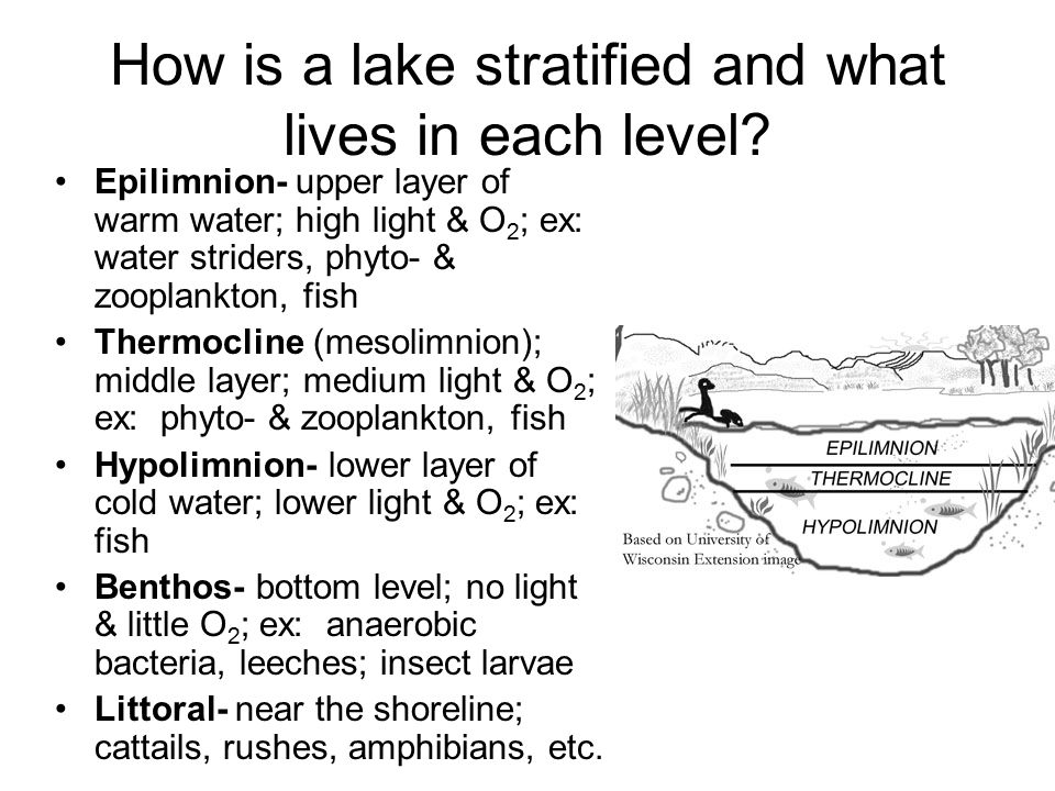 How is a lake stratified and what lives in each level