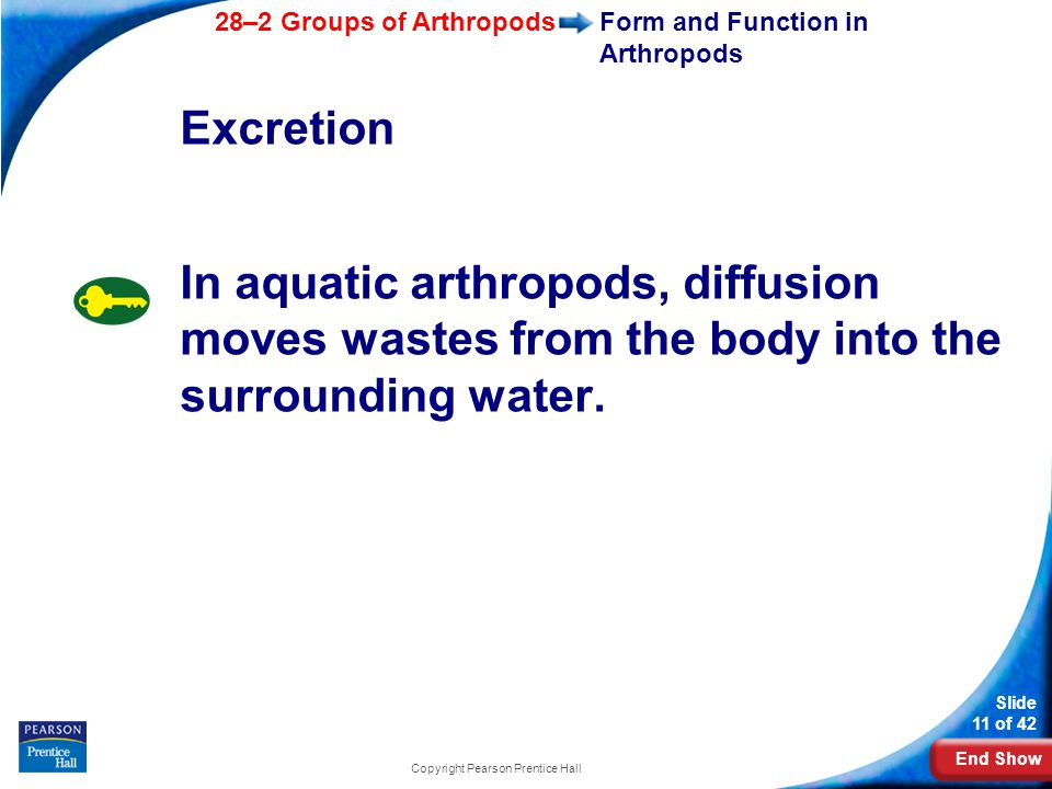 Form and Function in Arthropods
