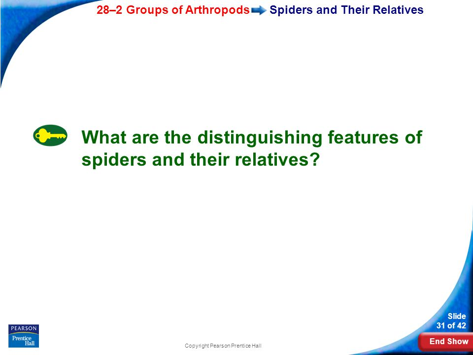 Spiders and Their Relatives