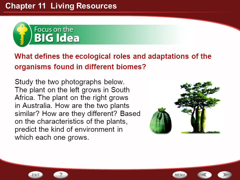 What defines the ecological roles and adaptations of the