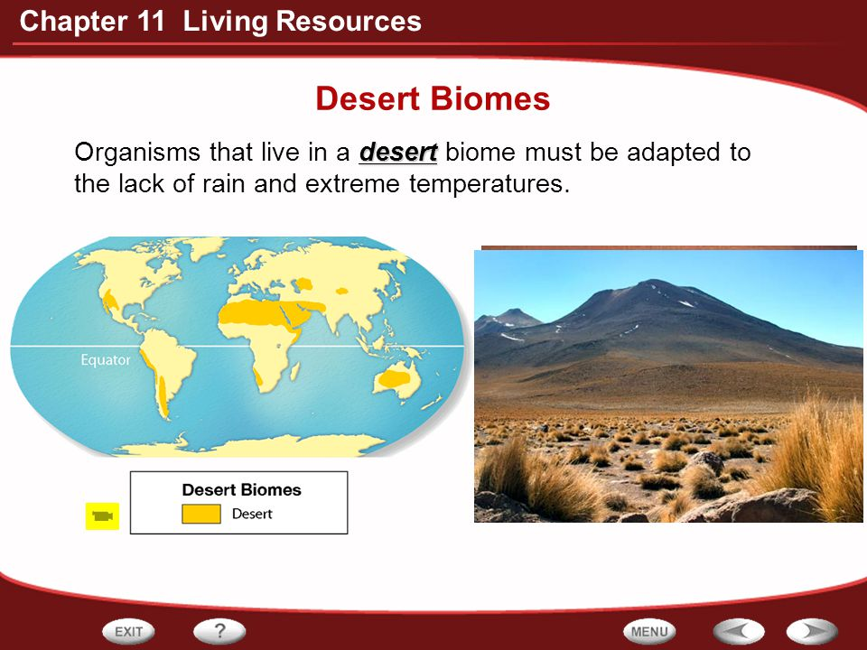 Desert Biomes Organisms that live in a desert biome must be adapted to the lack of rain and extreme temperatures.