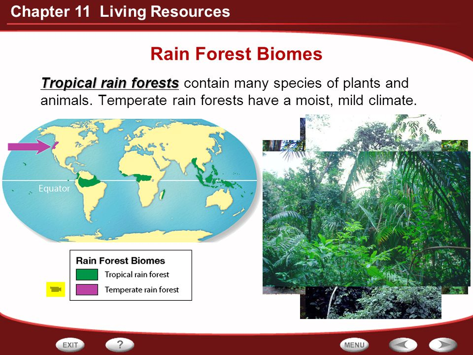 Rain Forest Biomes Tropical rain forests contain many species of plants and animals.