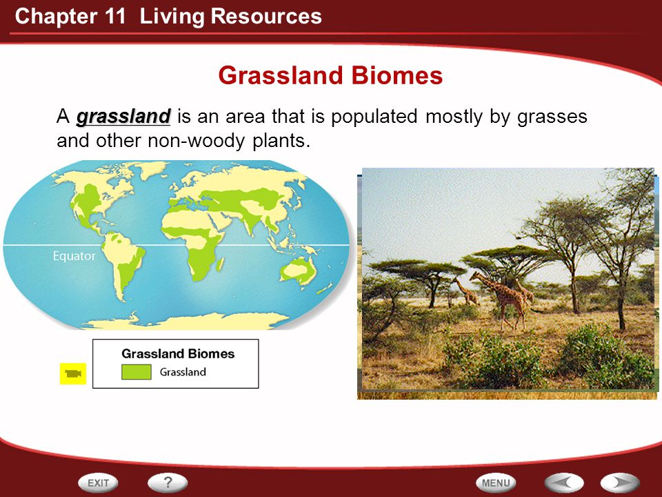 Grassland Biomes A grassland is an area that is populated mostly by grasses and other non-woody plants.