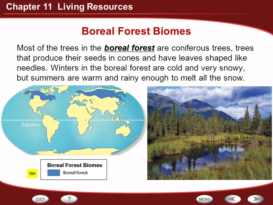 Boreal Forest Biomes