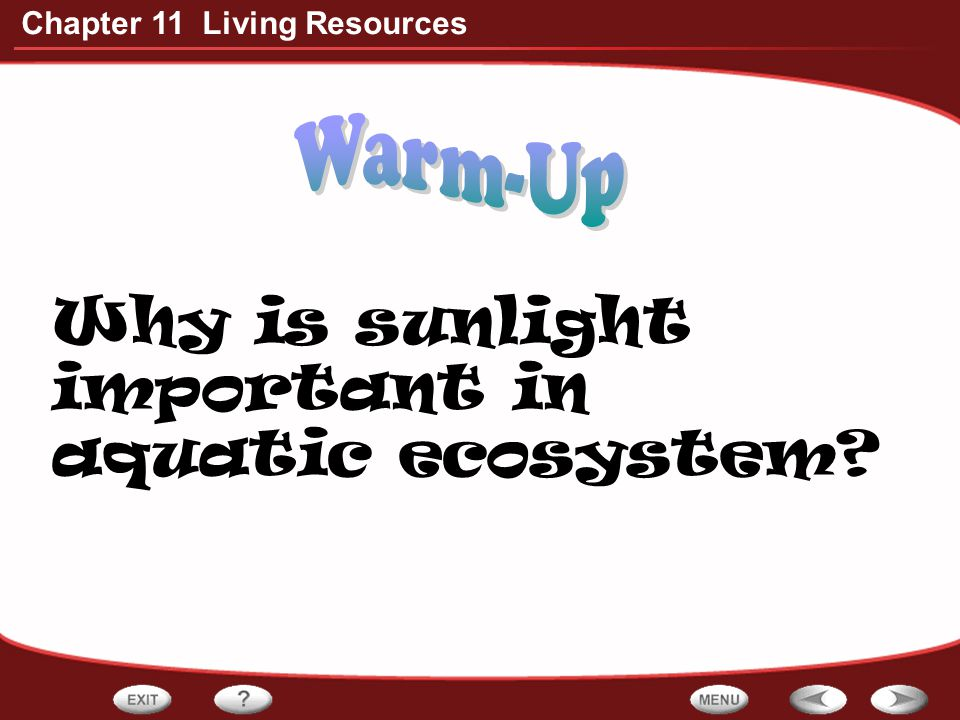 Why is sunlight important in aquatic ecosystem