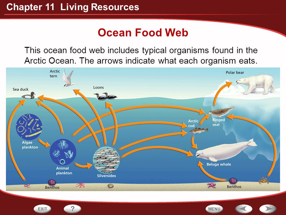 Ocean Food Web This ocean food web includes typical organisms found in the Arctic Ocean.