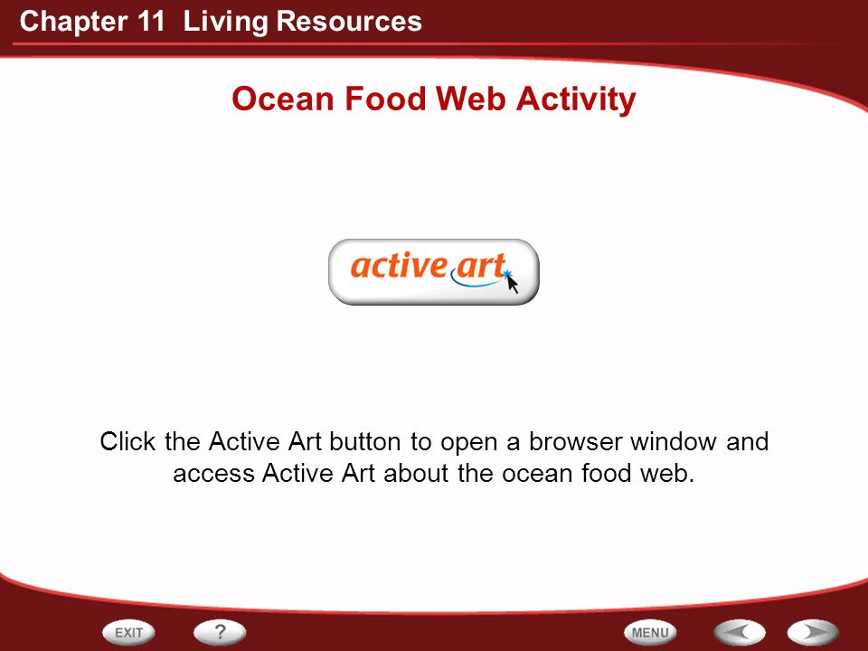 Ocean Food Web Activity