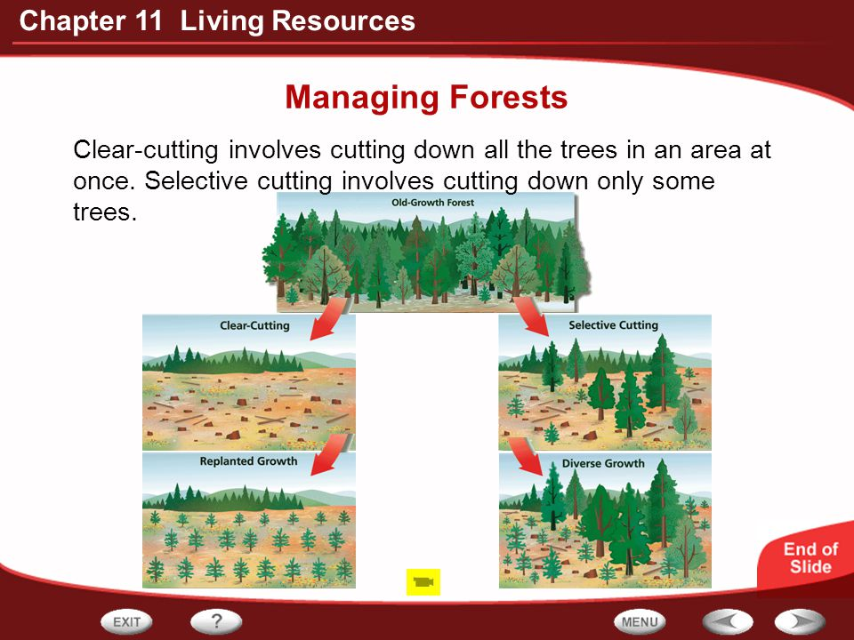 Managing Forests Clear-cutting involves cutting down all the trees in an area at once.