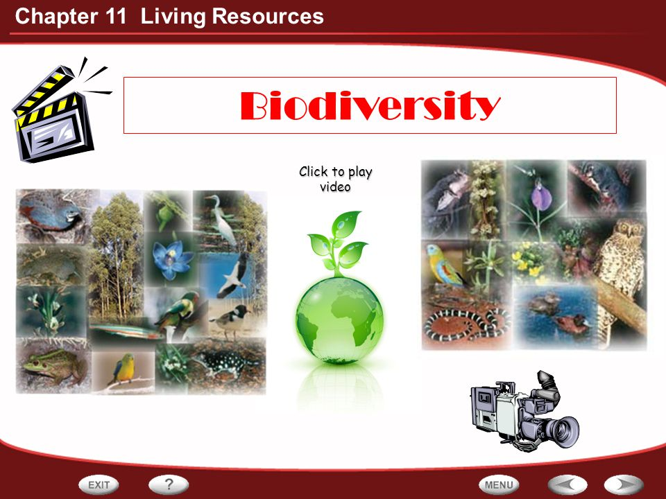Biodiversity Click to play video