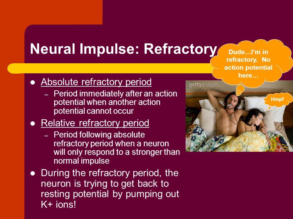 Neural Impulse: Refractory