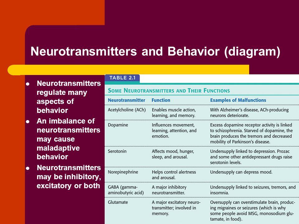 Neurotransmitters and Behavior (diagram)