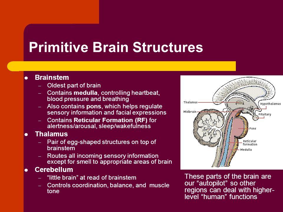 Primitive Brain Structures