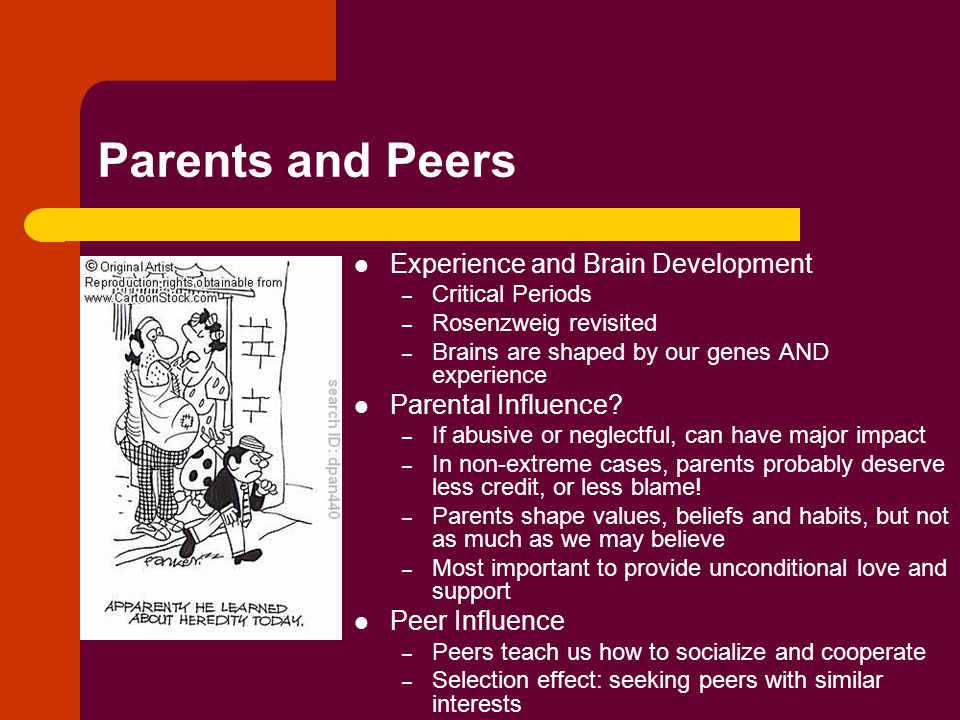 Parents and Peers Experience and Brain Development Parental Influence