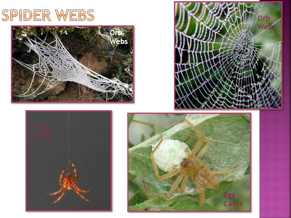 Spider Webs Orb Webs Orb Webs Drag Lines Egg Cases