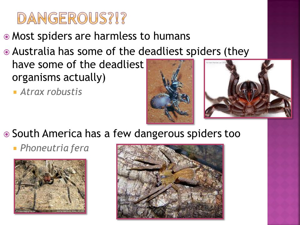 Dangerous ! Most spiders are harmless to humans
