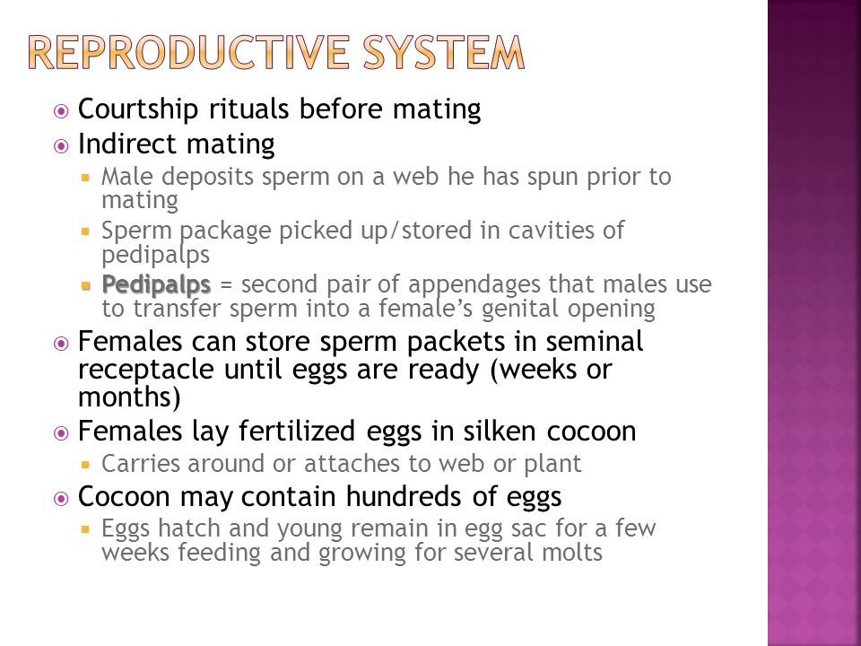 Reproductive system Courtship rituals before mating Indirect mating