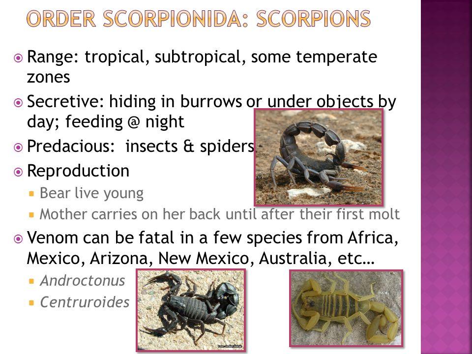 Order Scorpionida: Scorpions