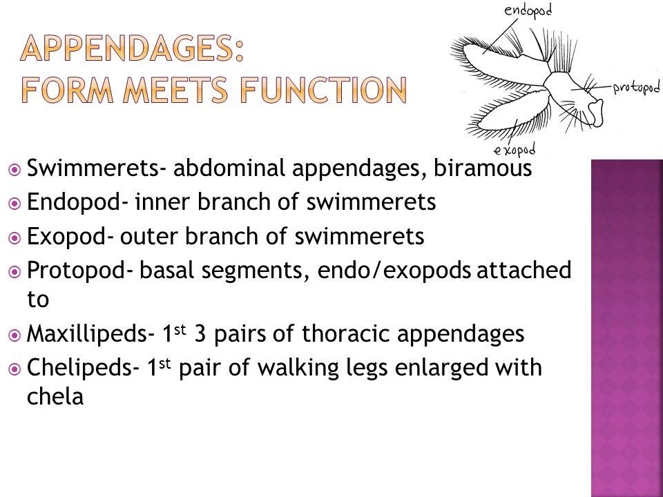 Appendages: Form meets function