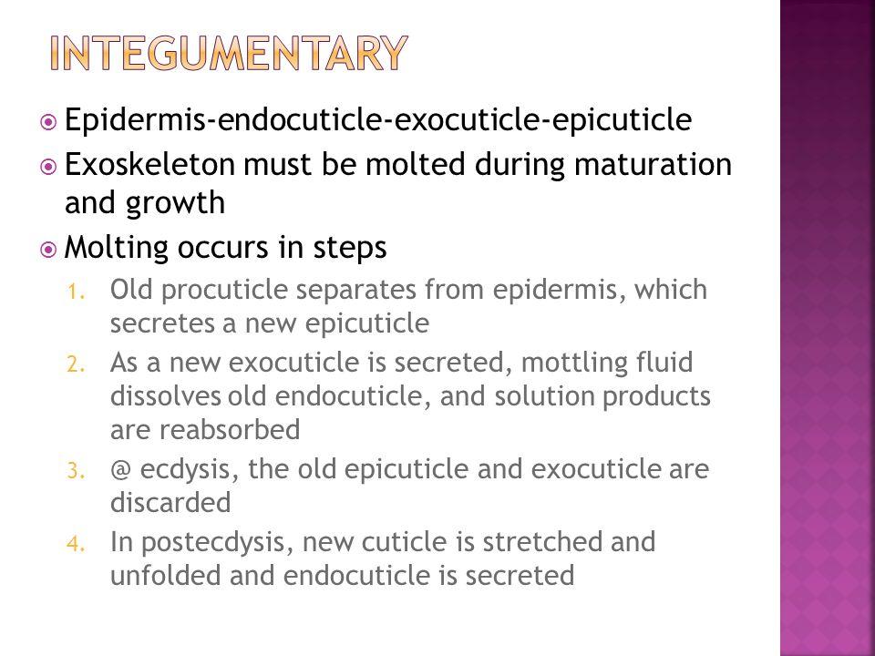 Integumentary Epidermis-endocuticle-exocuticle-epicuticle
