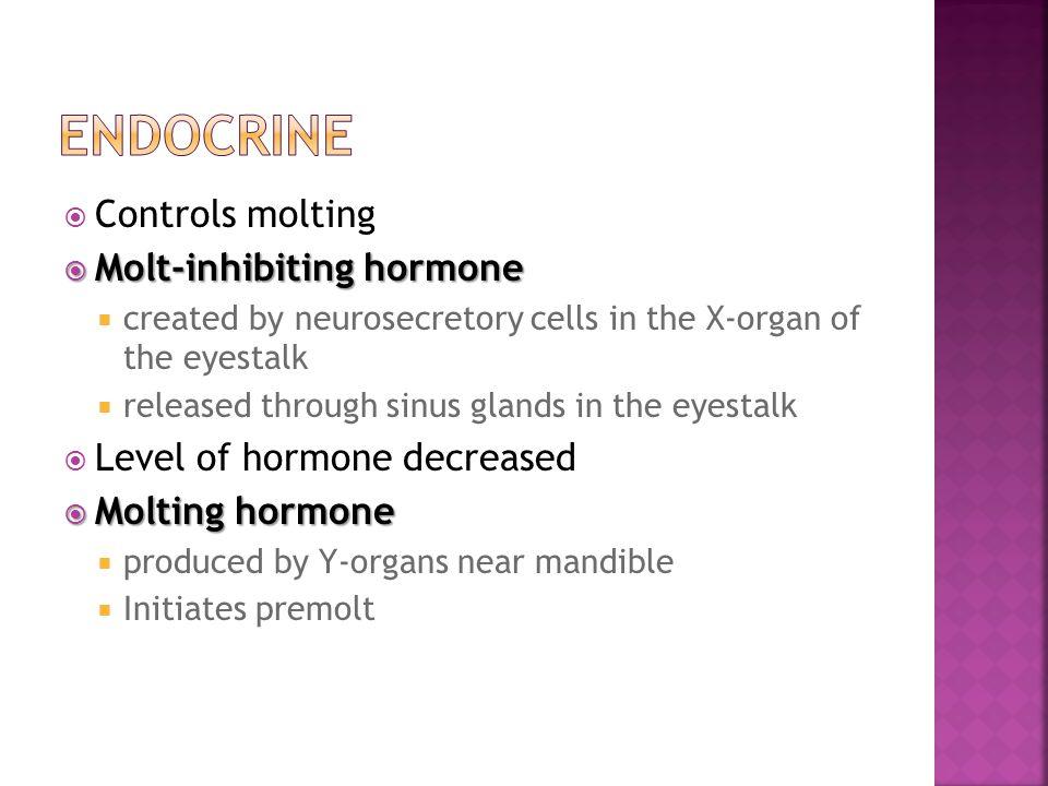 Endocrine Controls molting Molt-inhibiting hormone