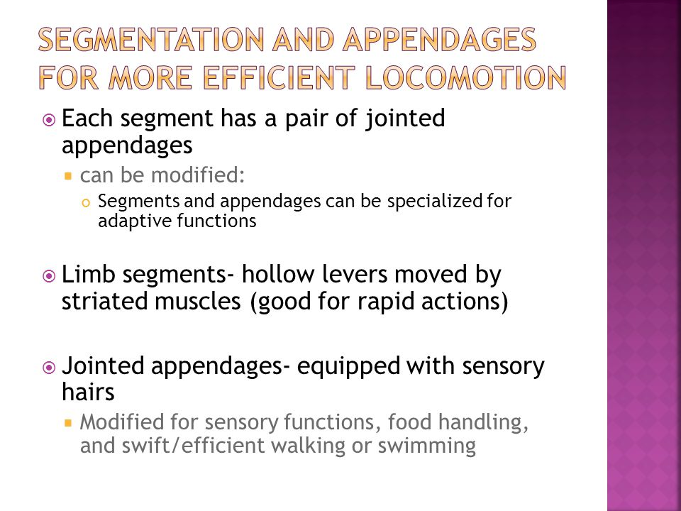 Segmentation and appendages for more efficient locomotion