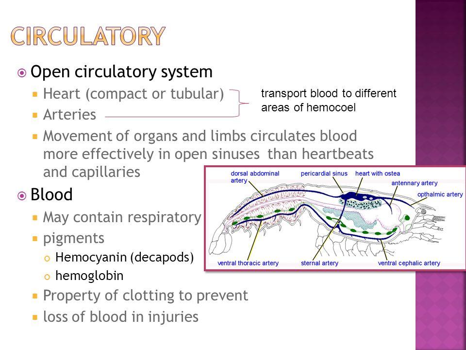 Circulatory Open circulatory system Blood Heart (compact or tubular)