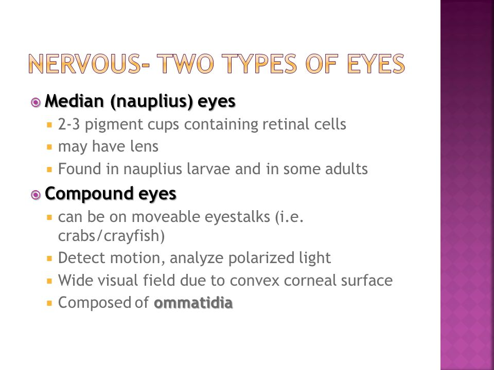 Nervous- Two types of eyes